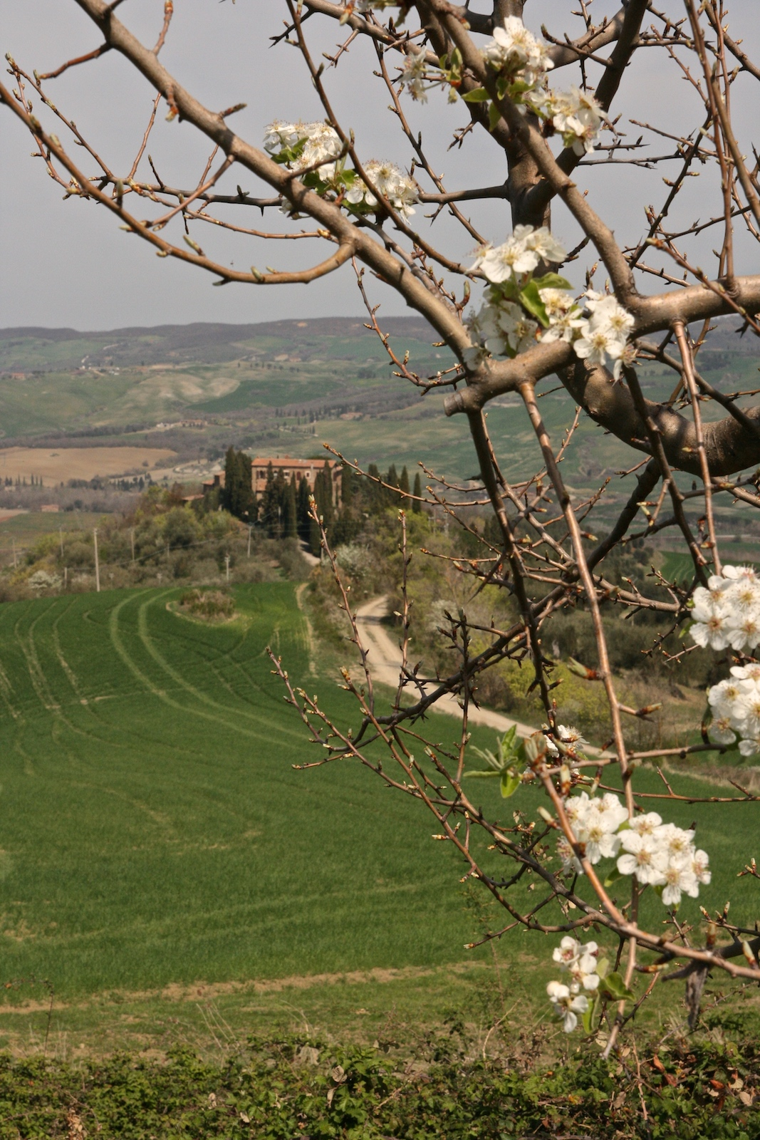 Val d'Orcia весной